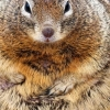 Plump squirrels and climate change