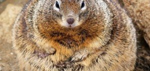 This Fat Squirrel, (CC BY 2.0)