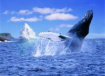 Petty Harbour Whales and Icebergs