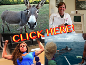 "Click Bait. Collage includes photos: ""Donkey"" Some rights reserved (CC BY 2.0) by Zenjazzygeek. ""Whales!"" Some rights reserved (CC BY-NC-SA 2.0) by Behan ""800_6377"" Some rights reserved (CC BY-NC-SA 2.0) by Brandon Binkwilder Santana. ""Happy Doctor"". Some rights reserved (CC BY-SA 2.0) by Lisa Brewster. All sourced from Flickr."